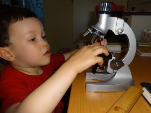 My son keeping busy with a microscope and developing a healthy interest in biology