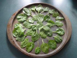 Baby spinach laid out on baking tray.  I have no