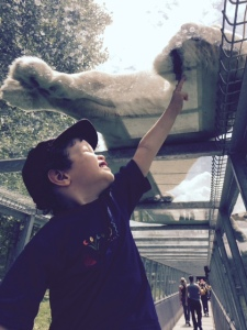 Our son Caleb reaching for a white lion at Parc Safari, Quebec.