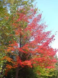 Beautiful Fall colors in Saint Lazare, Québec. Image courtesy of potentialdoctor.com