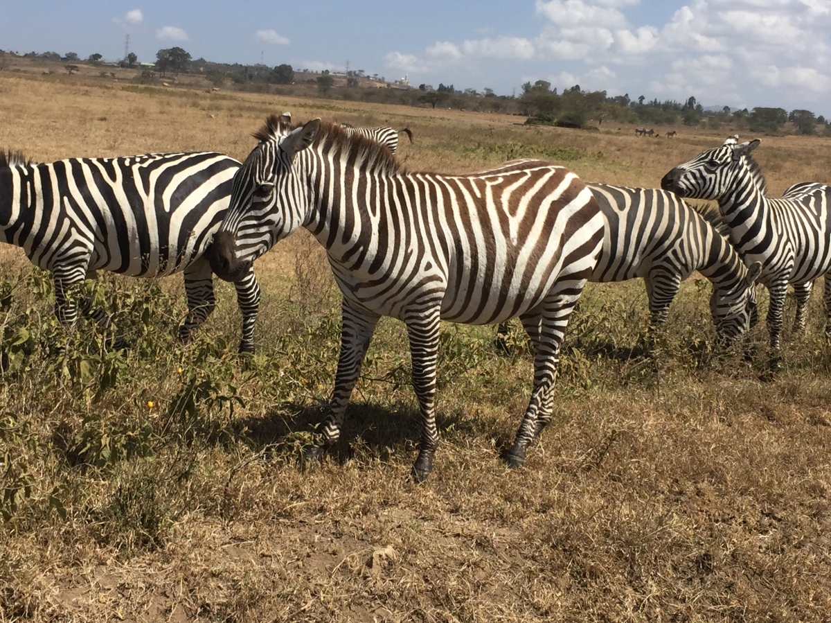 More Pictures from Kenya